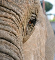 Free Elephant Stock Photos - 13960923