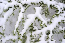 Free Snow Covered Branches Royalty Free Stock Photography - 13961847