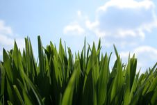 Free Grass And Clouds Stock Photos - 13962503