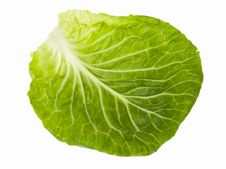 Free Cabbage Stock Photo - 13963160