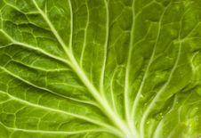 Free Cabbage Stock Image - 13963191