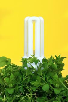 Energy Saving Lamp Royalty Free Stock Images