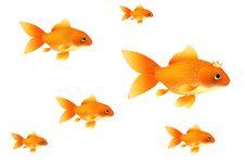 Free Goldfishes. Vector Stock Photo - 13964260