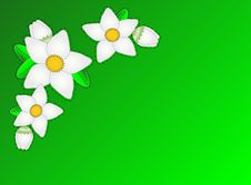 Vector Eps10.  Green Copy Space With White Flowers Royalty Free Stock Photography