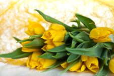 Free Yellow Tulips Stock Images - 13965554