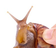 Free Snail Macro Royalty Free Stock Images - 13966049