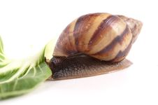 Free Snail Macro Stock Images - 13966064