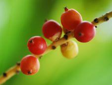 Free Wild Fruits Royalty Free Stock Photos - 13966628