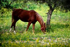 Free Horse In Paddock Stock Photography - 13967102