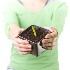 Holding Pot With Early Plant Stock Photos
