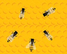 Free Bees On Honey Hive Background Royalty Free Stock Photo - 13968755