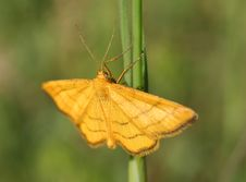 Free Yellow Butterfly Stock Photography - 13968862