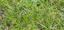 Free Texture Of Grass Stock Images - 13969104
