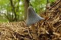 Free Mushroom In Straw Litter Stock Image - 13974821