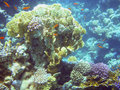 Free Corals Of Red Sea Stock Images - 13975494
