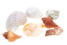 Free Beautiful Seashells Isolated On White Stock Photos - 13971703