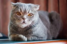 Free Cat Stock Images - 13973644