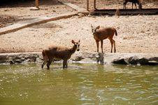Free Deers Royalty Free Stock Image - 13974236