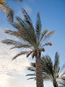Free Shapes Of Tropical Palms Stock Photos - 13974563