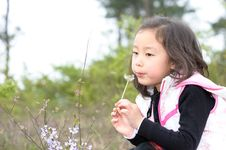 Free Asian Girl And Dandelion Royalty Free Stock Image - 13975456