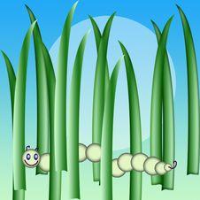 Free Caterpillar Stock Photography - 13976252