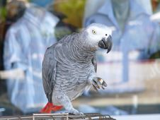 Free Parrot With Bread Stock Images - 13976674