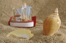 Free Shell At Sunny Ocean Beach Stock Image - 13978171