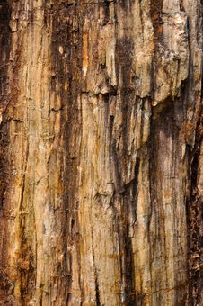 Free Fossil Wood Surface Color And Texture Stock Photo - 13980840