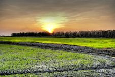 Free Rice Fields Royalty Free Stock Photo - 13982505