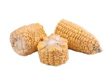Free Peeled Corn Stock Images - 13983274