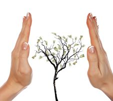Hands And Money Tree Stock Photo