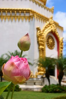 Free Lotus Royalty Free Stock Images - 13987399