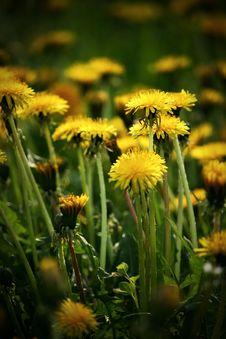 Free Spring Royalty Free Stock Image - 13987826