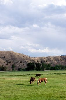 Free Horses Grazing Royalty Free Stock Images - 13988139