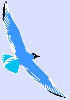 Free Seagulls Stock Photo - 13988910
