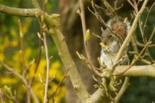 Free Squirrel Stock Photo - 13989540