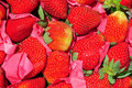 Free Fresh Strawberries Royalty Free Stock Photography - 13990637