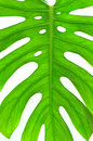 Free Water Drops On Green Leaf Royalty Free Stock Photo - 13998465