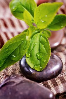 Free Spa Treatment - Rock And Green Plant Stock Image - 13990581