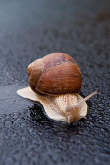 Free Moving Slug Stock Photo - 13990770