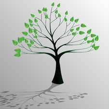 Tree-Ecology Royalty Free Stock Image