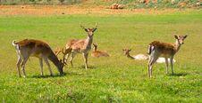 Free Deer Royalty Free Stock Image - 13990966