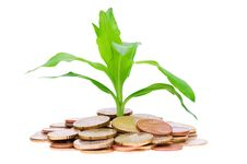 Free Coins And Plant Royalty Free Stock Image - 13991106