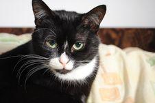 Free Black And White Cat Stock Photo - 13991190