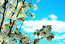 Free Blooming Flowers, Bright Sky Stock Photos - 13991493