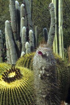 Free Cactus Garden Royalty Free Stock Photos - 13991598
