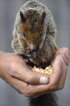 Free Squirrel Stock Photography - 13992582