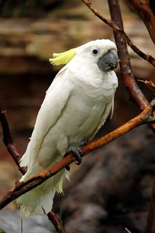 Free Large Tropical Parrot Stock Photos - 13993023