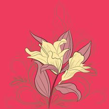Free Lily Flowers Royalty Free Stock Photo - 13993715