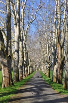 Free Parkway Of Plane Tree Stock Photo - 13994020